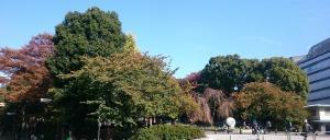木立の向こう側は京成上野駅