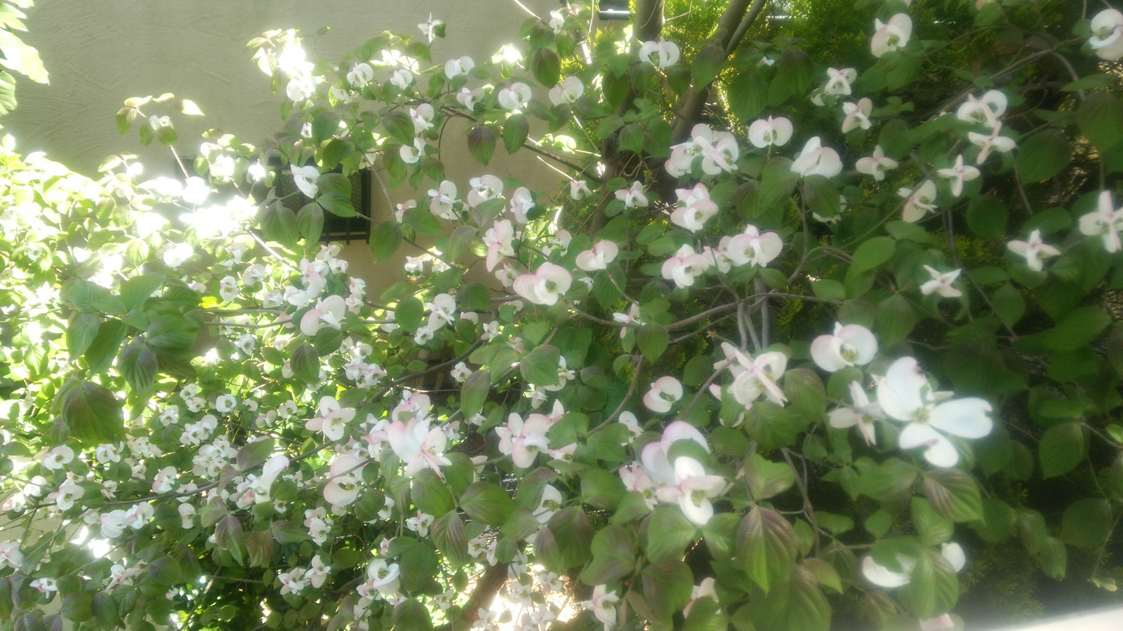 ベランダから花