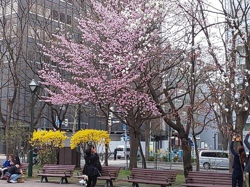 DSC_0408大通公園②