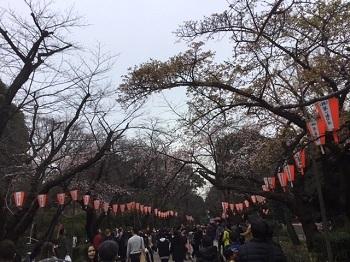 上野公園内さくら通り