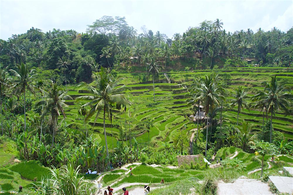 バリ島 Tanjung Sari Hotel 滞在記 その3 taba sari TEGALANGのライステラス1