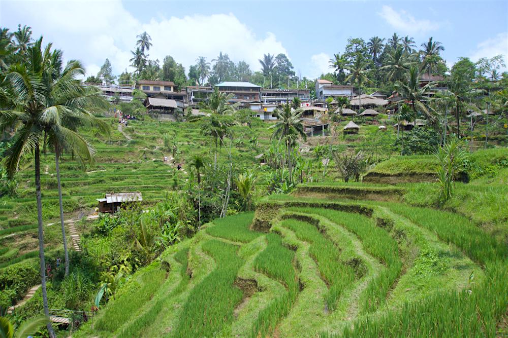 バリ島 Tanjung Sari Hotel 滞在記 その3 taba sari TEGALANGのライステラス2