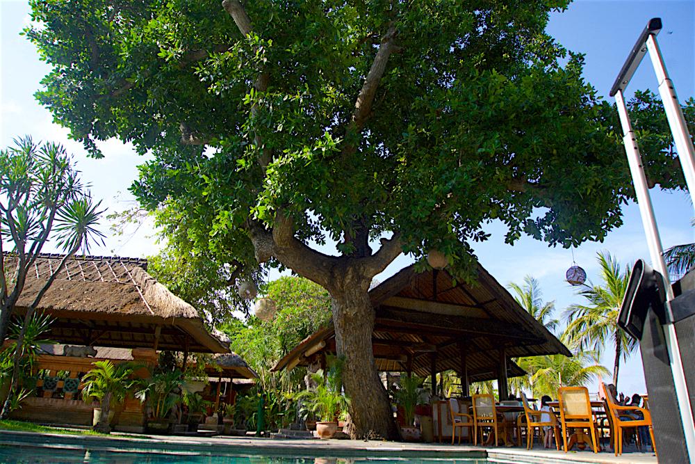 バリ島 Tanjung Sari Hotel 滞在記 その3 大木