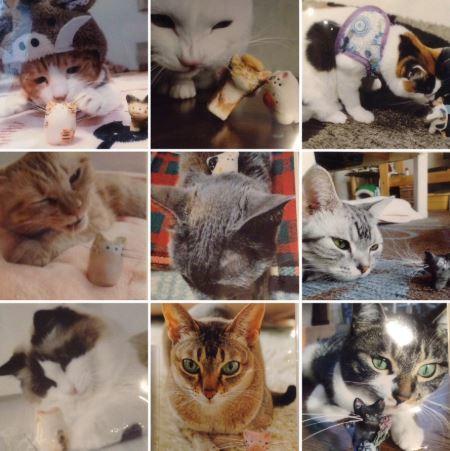 NN友さんの猫たち