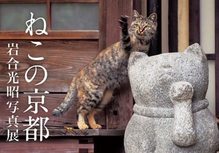 岩合光昭写真展 ねこの京都、秋