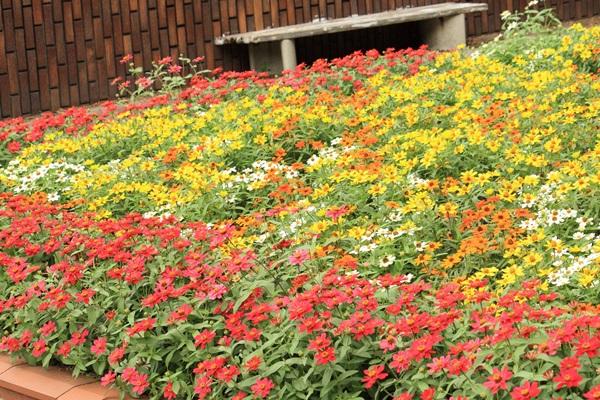 no007秋の花壇