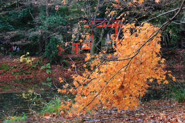 no015冬紅葉