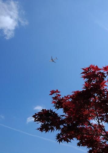 no003_04ノムラモミジと飛行機