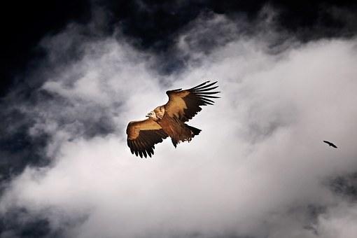 tibetan-1145932__340.jpg