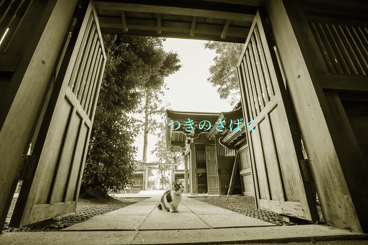 DSC05668mono03_1.jpg