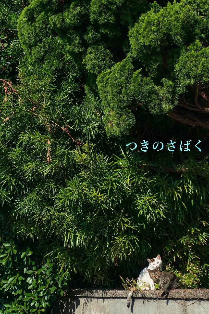 DSC06066adobefukei_1.jpg