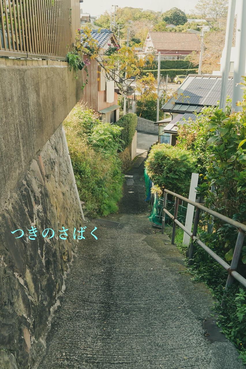 DSC06075vin07_1.jpg