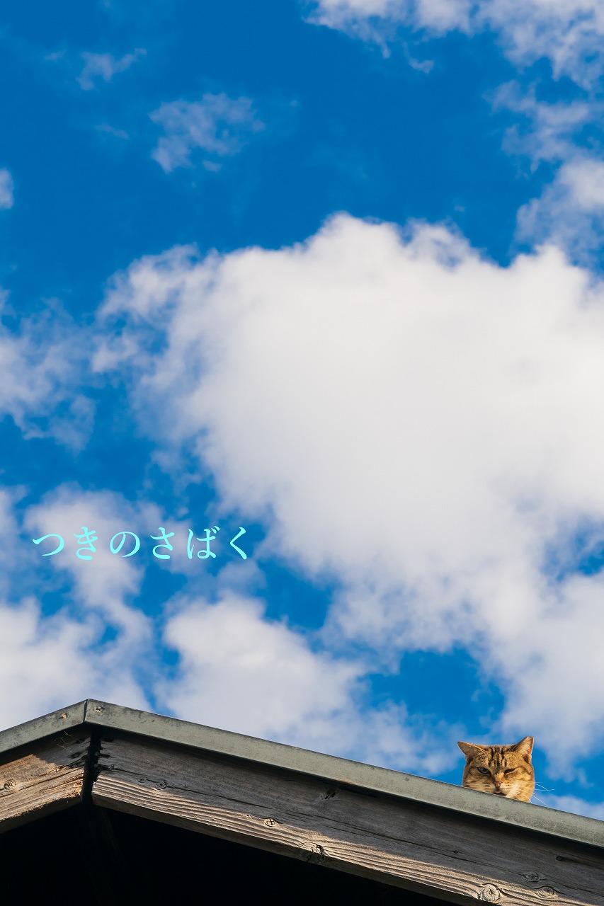DSC06421adobefukei5803_1.jpg