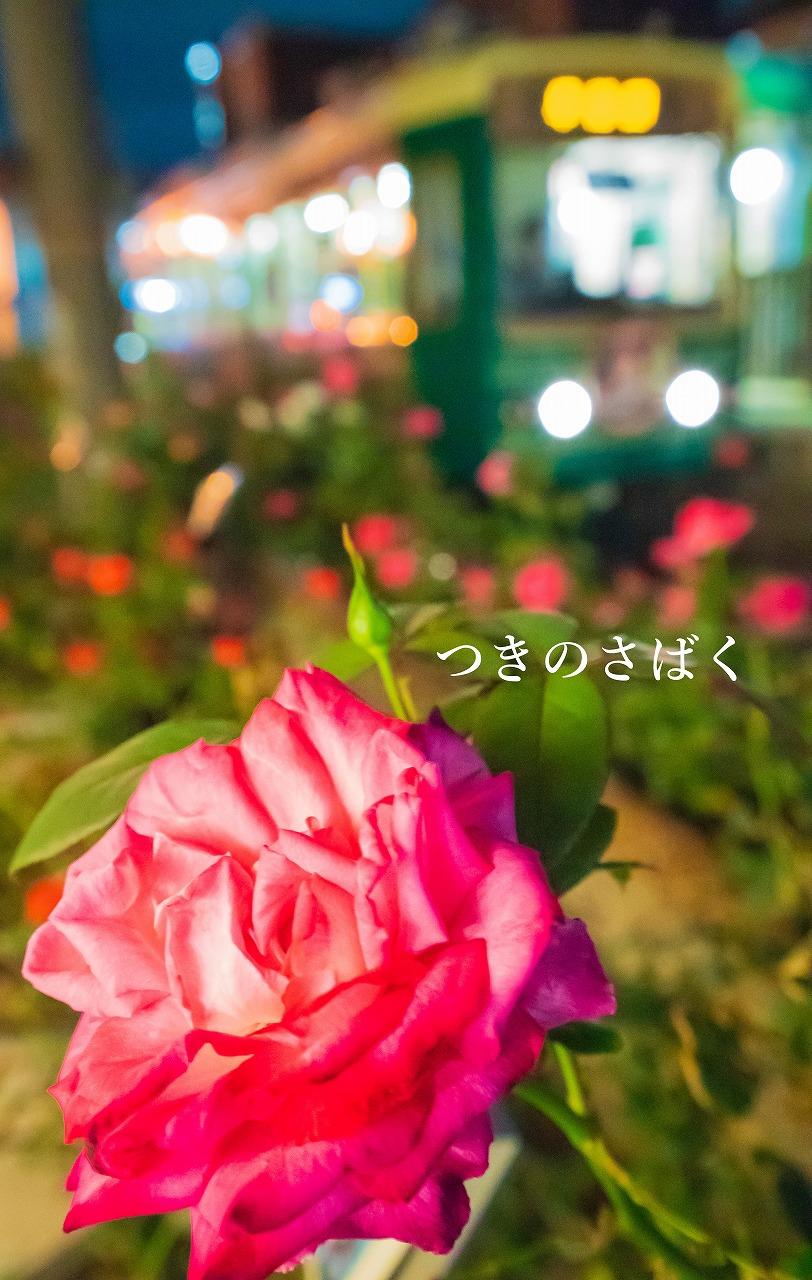 DSC06653adobefukei_1.jpg