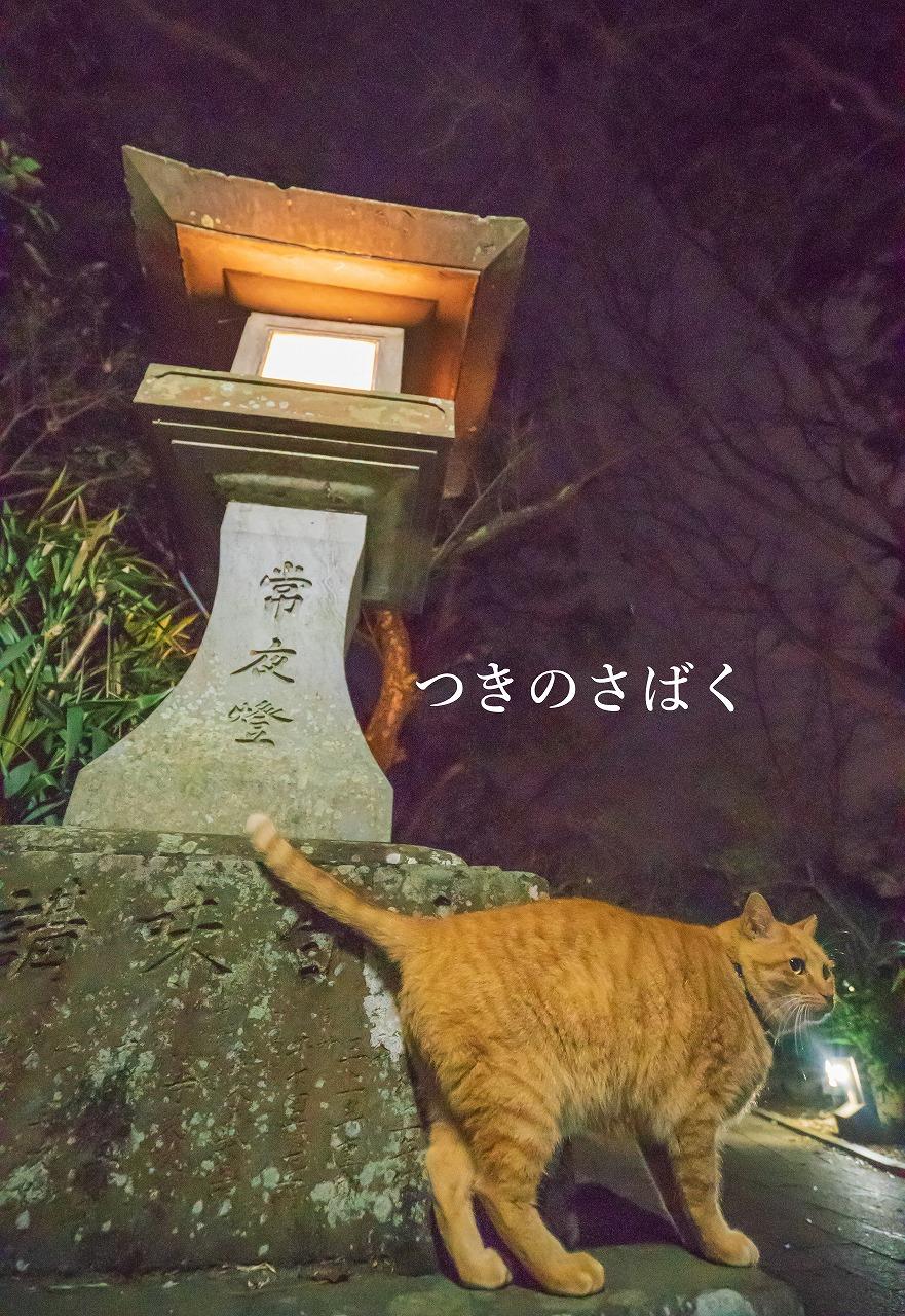 DSC07482adobefukei_1.jpg