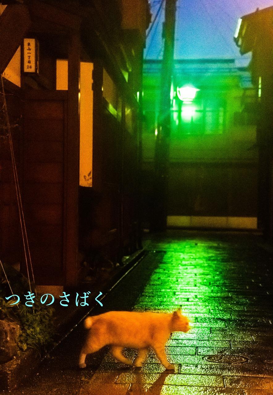 DSC07771m014660noizu_1.jpg
