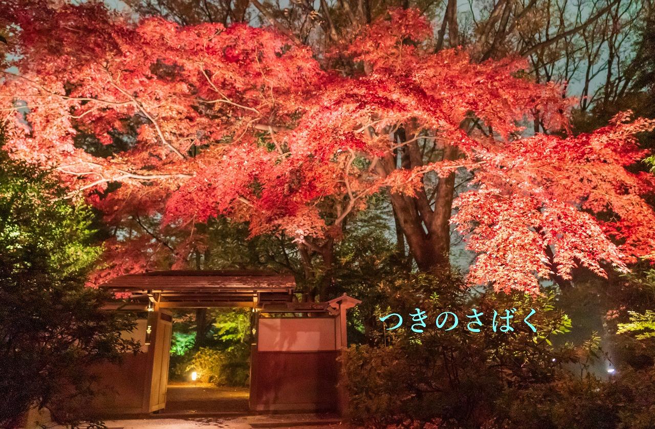 DSC09752fukei3338_1.jpg