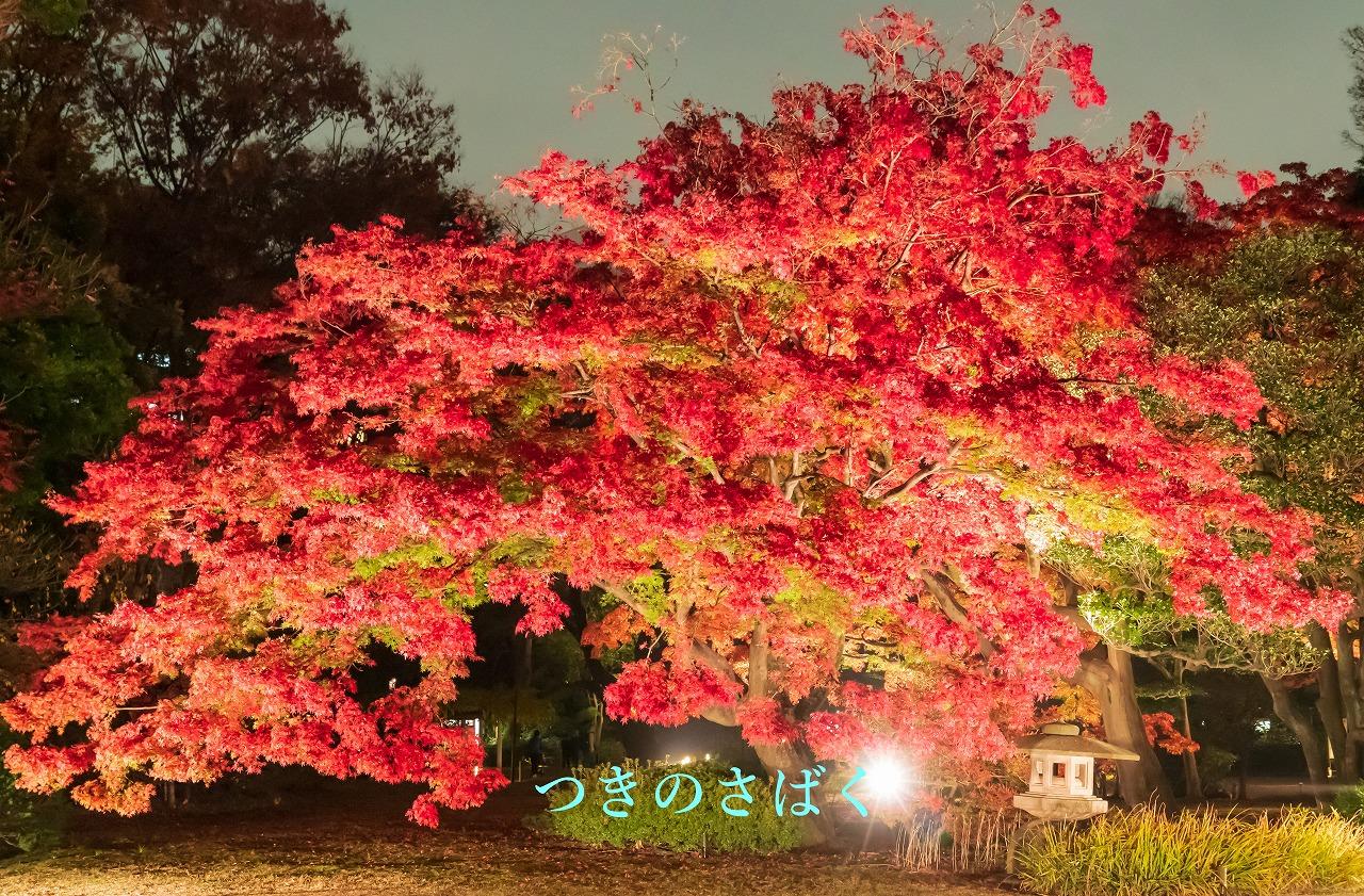 DSC09824fukei3549_1.jpg