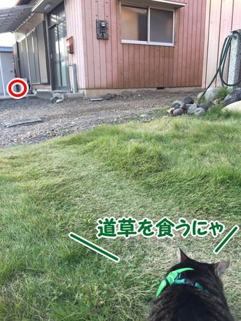 S__56385551.jpg