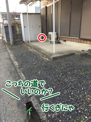S__56385553.jpg