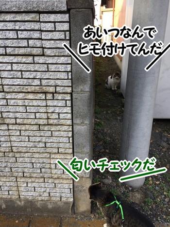 S__56385554.jpg