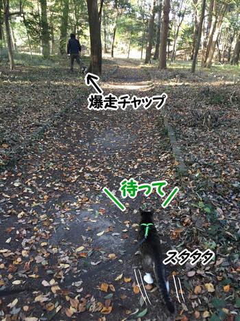 S__58408968.jpg