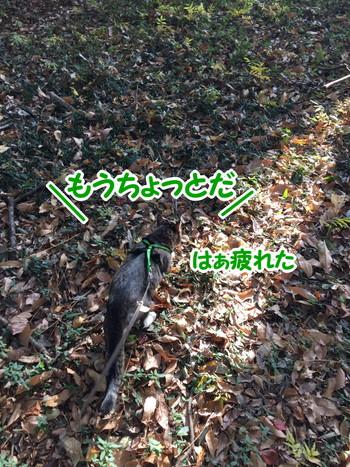 S__58408970.jpg