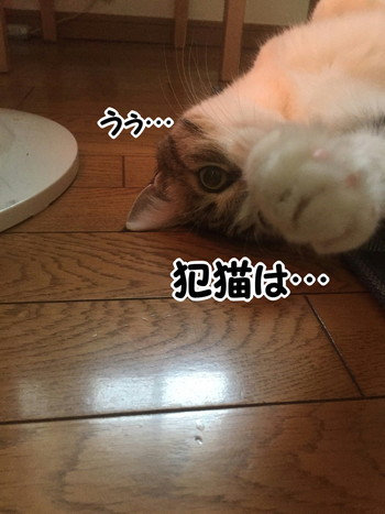S__58646545.jpg