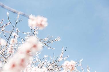 春っぽいお花背景のメッセージボード