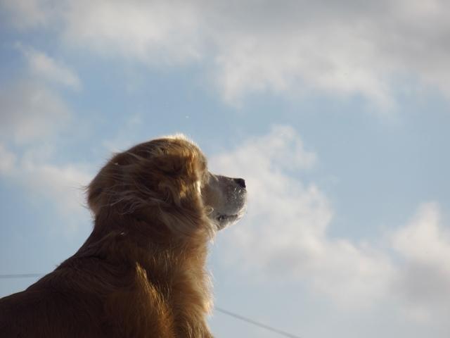 空を眺めるヴェルIMG_0906
