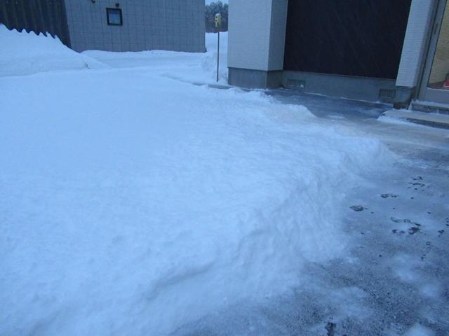 雪原を駆け回るゴールデンレトリバーIMG_1521