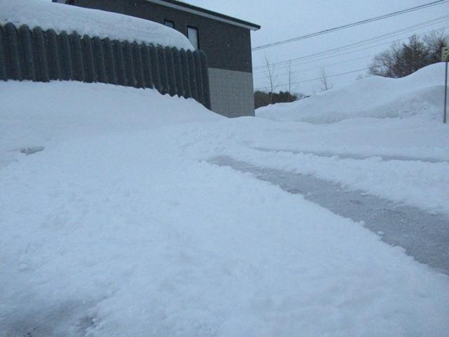雪原を駆け回るゴールデンレトリバーIMG_1559
