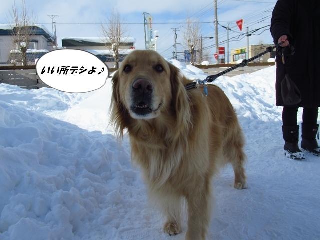 マイロ管区気象台地方へ遠征したデシ!IMG_2319