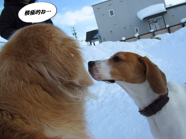 マイロ管区気象台地方へ遠征したデシ!IMG_2339