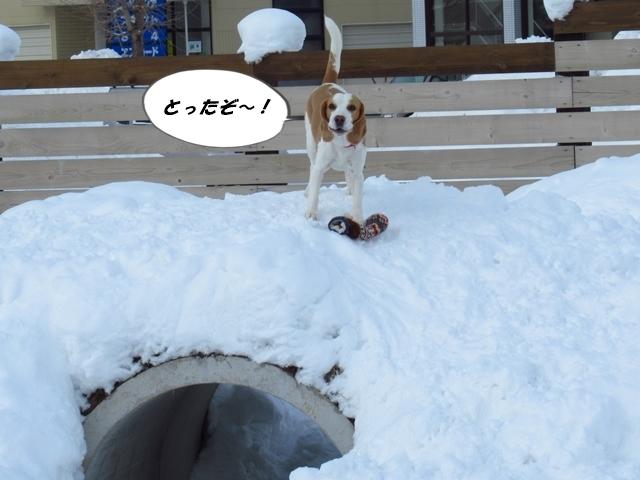 マイロ管区気象台地方へ遠征したデシ!IMG_2362
