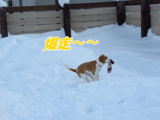 マイロ管区気象台地方へ遠征したデシ!IMG_2363