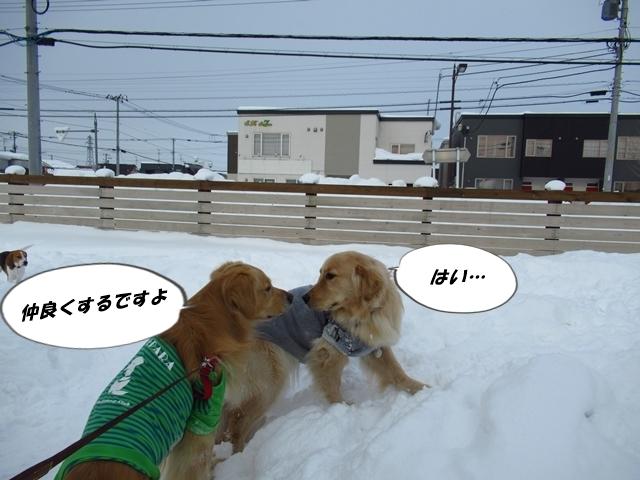 マイロ管区気象台地方へ遠征したデシ!IMG_2390