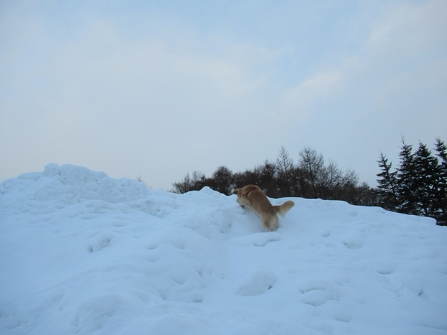 雪山の大将IMG_2944