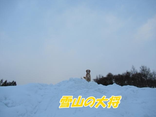 雪山の大将IMG_2951