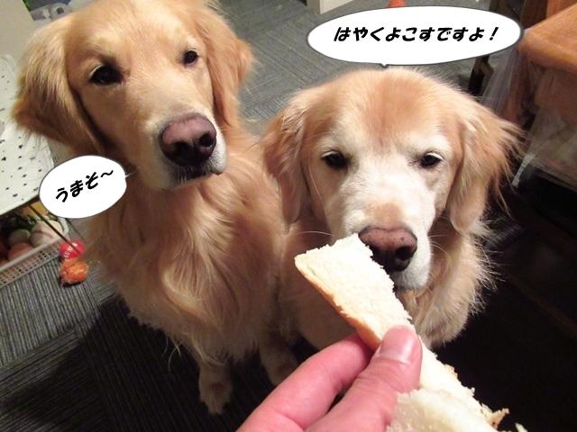 奇跡のパンを食すヴェルヴィオIMG_3523