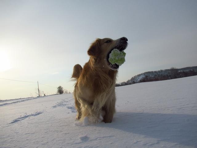 広~~~い雪原で♪IMG_3967