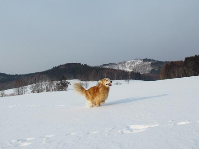 広~~~い雪原で♪IMG_3970