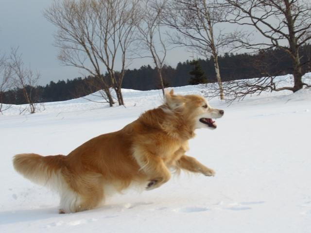 広~~~い雪原で♪IMG_3977