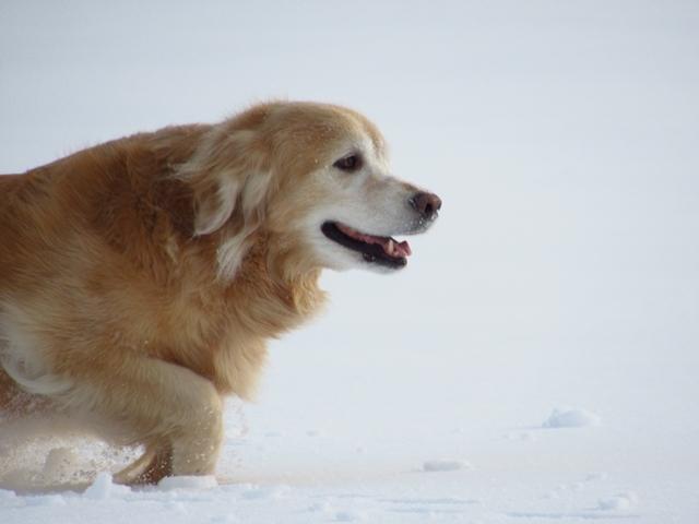 広~~~い雪原で♪IMG_4009