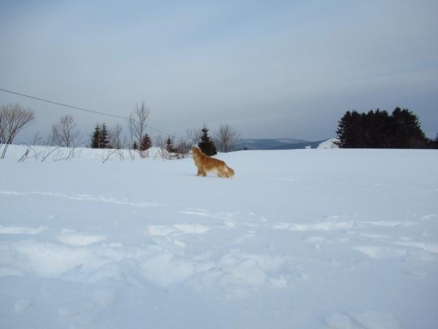 広~~~い雪原で♪IMG_4025