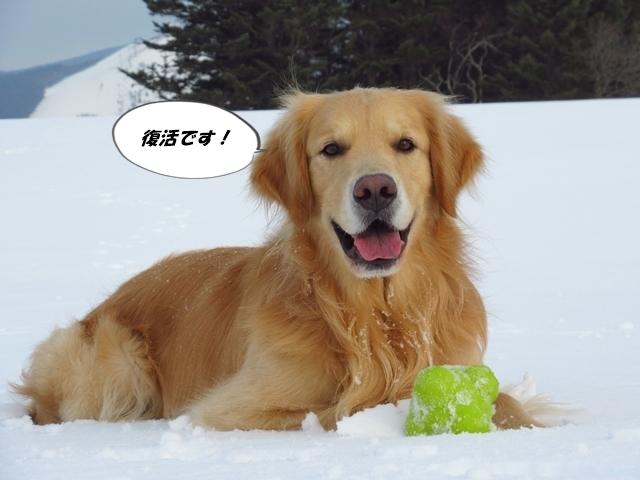 広~~~い雪原で♪IMG_4043