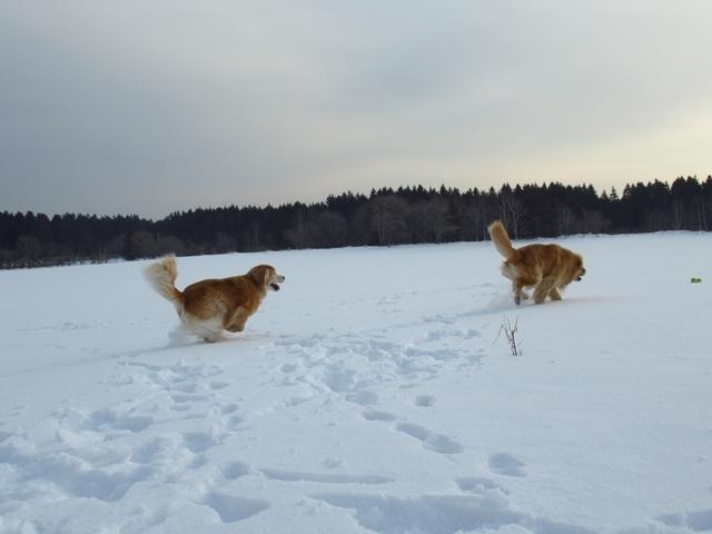 広~~~い雪原で♪IMG_4060