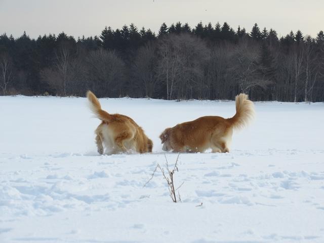 広~~~い雪原で♪IMG_4119