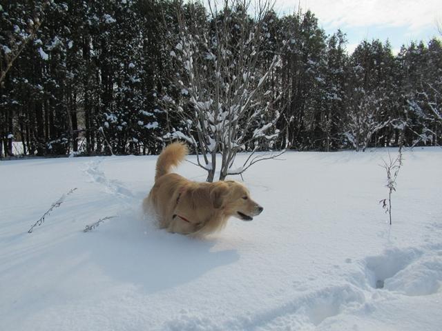 久しぶりの新雪♪IMG_6100