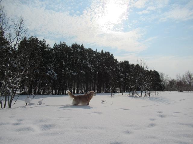 久しぶりの新雪♪IMG_6102